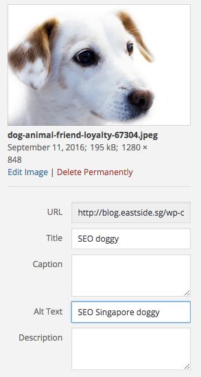 dog-animal-loyalty-friend